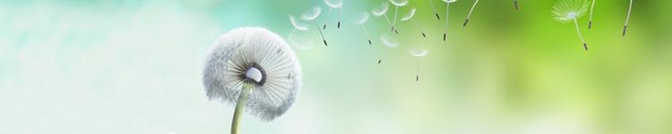 Allergie-Saison im Blick