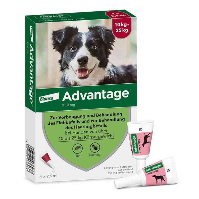 Advantage 250 für Hunde Lösung bei apotheke.at bestellen