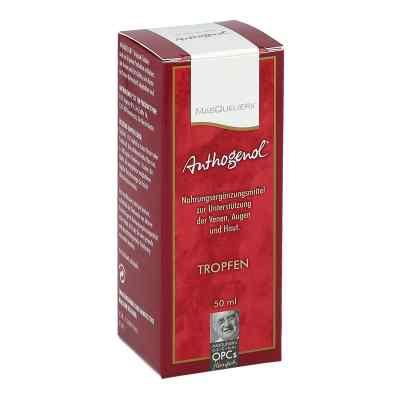 Anthogenol Masquelier Opc Tropfen  bei apotheke.at bestellen